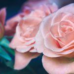 Menu de la Saint Valentin 2019 au 7e Art